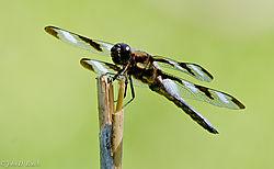 Dragonfly_7-0426.jpg