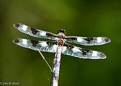 Dragonfly_8-0435.jpg