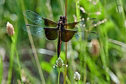 Dragonfly_CapOne.jpg