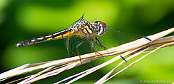 Dragonfly_Tulsa_Zoo.jpg