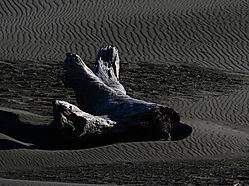 Driftwood5.jpg