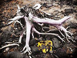 Dry_Roots_0060.jpg
