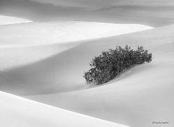 Dunes_Composition_2_Death_Valley_copy.jpg