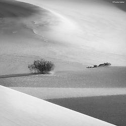 Dunes_Composition_3_Death_Valley_copy.jpg