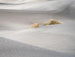 Dunes_Composition_8_Death_Valley_copy.jpg