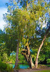 EVENING_TREES.JPG