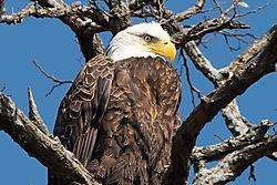 Eagle-H-5920-Edit.jpg