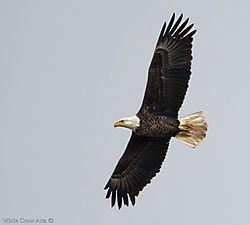 Eagle6-PBP2118.jpg