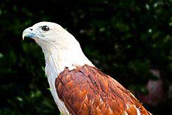 Eagle_011.jpg
