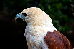 Eagle_032.jpg