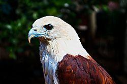 Eagle_042.jpg
