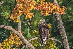 Eagle_9-20-21_1.jpg