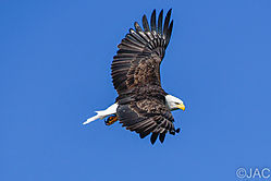 Eagle_In_The_Sun.jpg