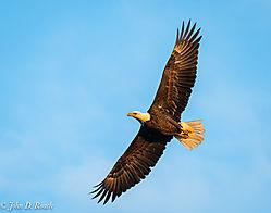 Eagle_along_the_James_River-21.jpg