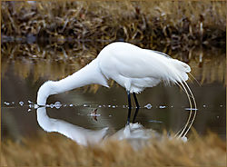 Egret-Continuum_-John-Straub.jpg