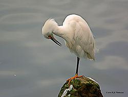 Egret-On-The-Rocks-2-PPW.jpg