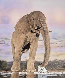Elephant_Dream.jpg