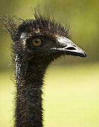 Emu_1_Web_ready_.jpg