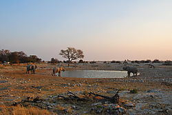 Etosha_Waterhole_at_sundown_18_32.JPG