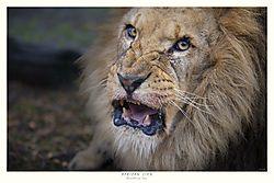 FINAL_TITLED_LION.jpg