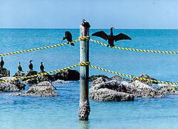 FLORIDA_BIRDS1.jpg
