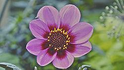 FLOWER_FLYER.jpg