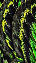 Fire_leaf.jpg
