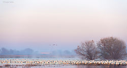 First_Light_San_Joaquin_Valley_Wetlands.jpg