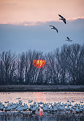 First_Sunrise_of_the_Year_San_Joaquin_Valley_Wetlands.jpg