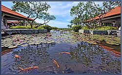 Fish-Pond-wide-angle-068.jpg