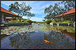 Fish-Pond1-wide-angle-068.jpg