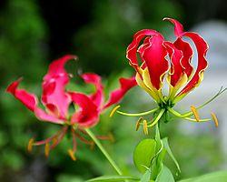 Flower-1BRed.jpg