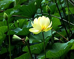 Flower-3BRed.jpg
