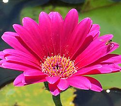 Flower211.jpg