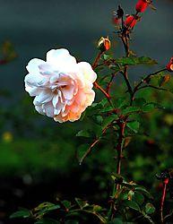 Flower5nik.jpg