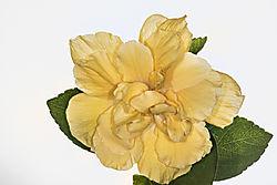 Flower_EEE.jpg