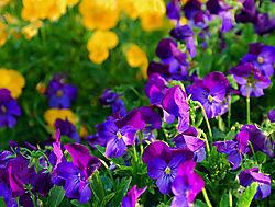 Flowers_DSC_2459_BP2J_copy.jpg