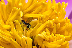 Flowers_at_Home_16_and_18_May_2015-512.jpg