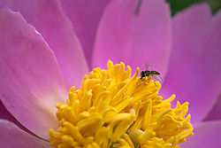 Flowers_at_Home_16_and_18_May_2015-523.jpg