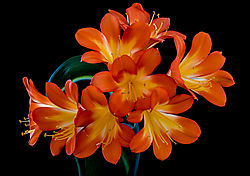 Flowers_at_Home_2_May_2015-106.jpg