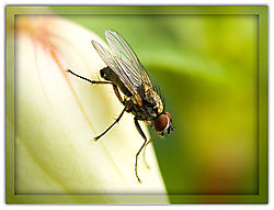 Fly-on-Fusia-_1.jpg