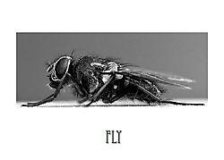 Fly_-_mono.jpg