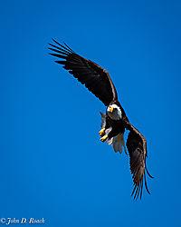 Fly_like_an_Eagle-6.jpg