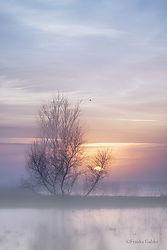 Foggy_Sunrise_4_San_Joaquin_Valley.jpg