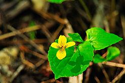 Forest_Flower.jpg