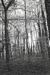 Forest_Light_21.jpg