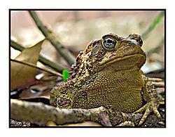 Frog6686.jpg