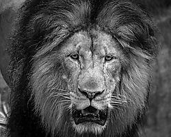 Furlough_Day_-_National_Zoo_22_Jul_13-437.jpg