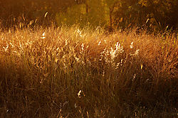 GOLDEN_GRASS_SUNRISE_HOEDSPRUIT_SOUTH_AFRICA_14_06_8130-2LR.jpg