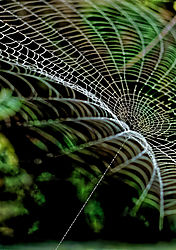 G_2_2326_B_House_Spider_Web.jpg